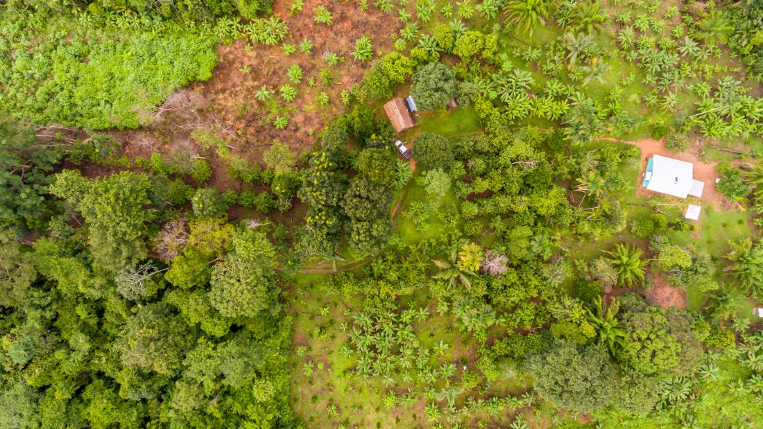 Aerial view of land with a variety of tropical crops