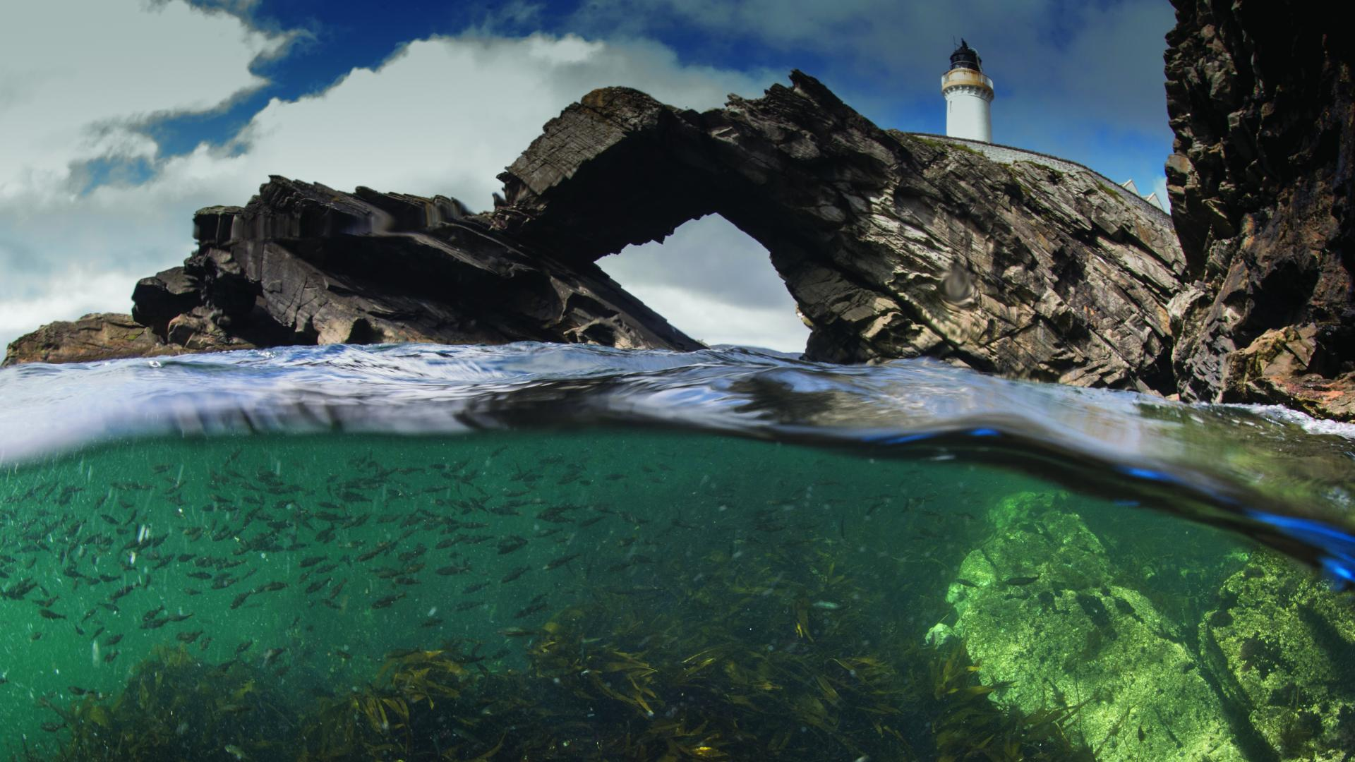 Costal lighthouse with marine life underwater