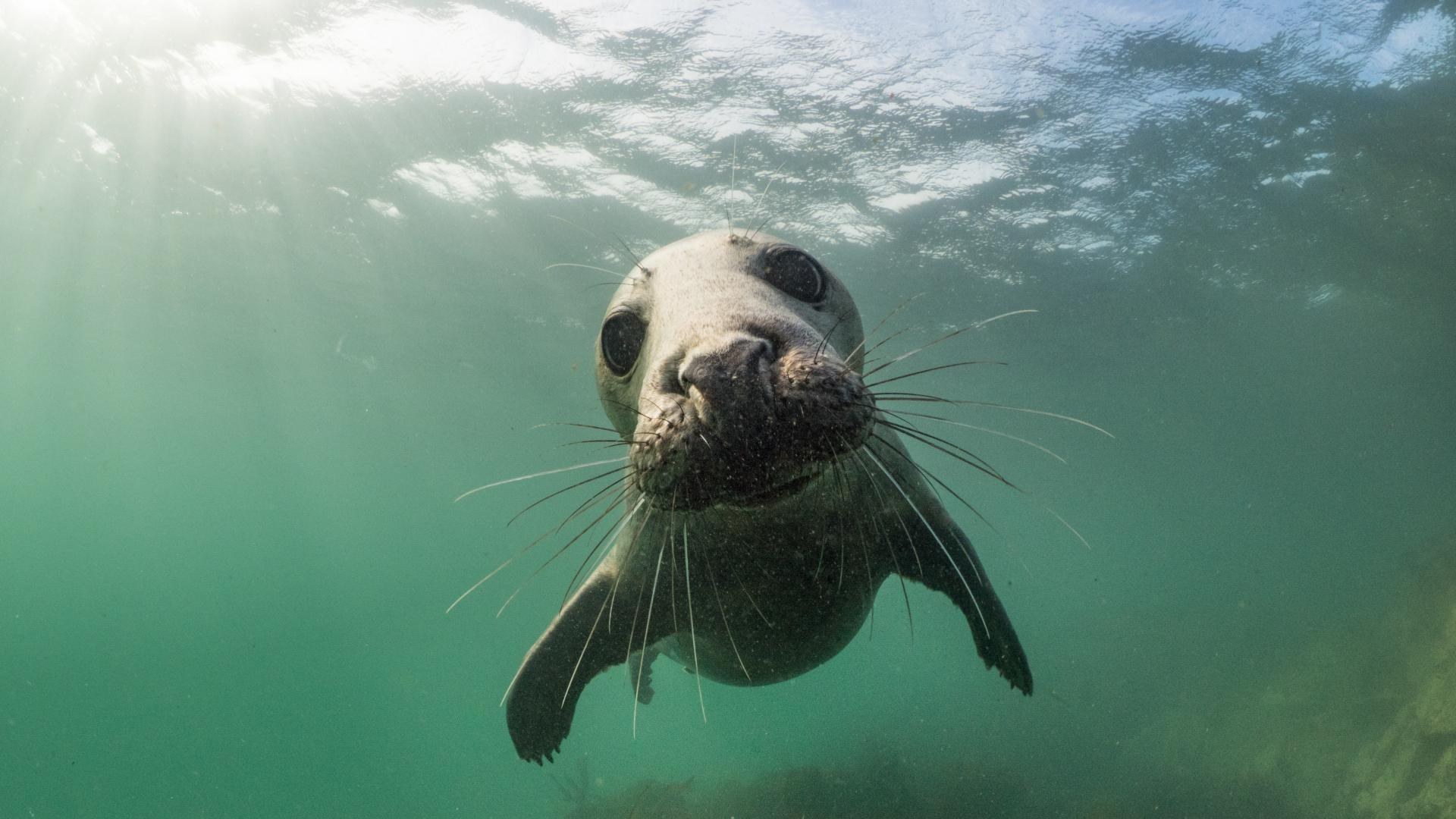 Sea lion swimming on ocean bed