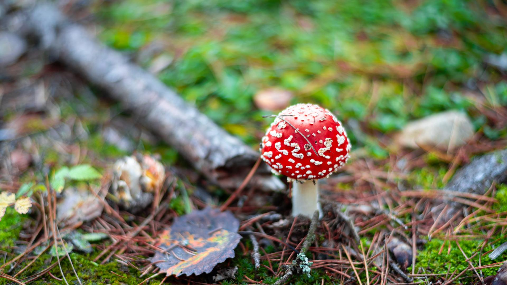 Wild mushroom growing in a forest