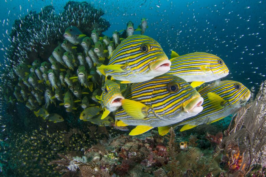 Underwater image of fish at a reef.