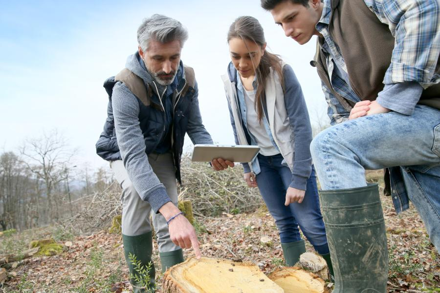 Students and lecturer analysing at a tree stump