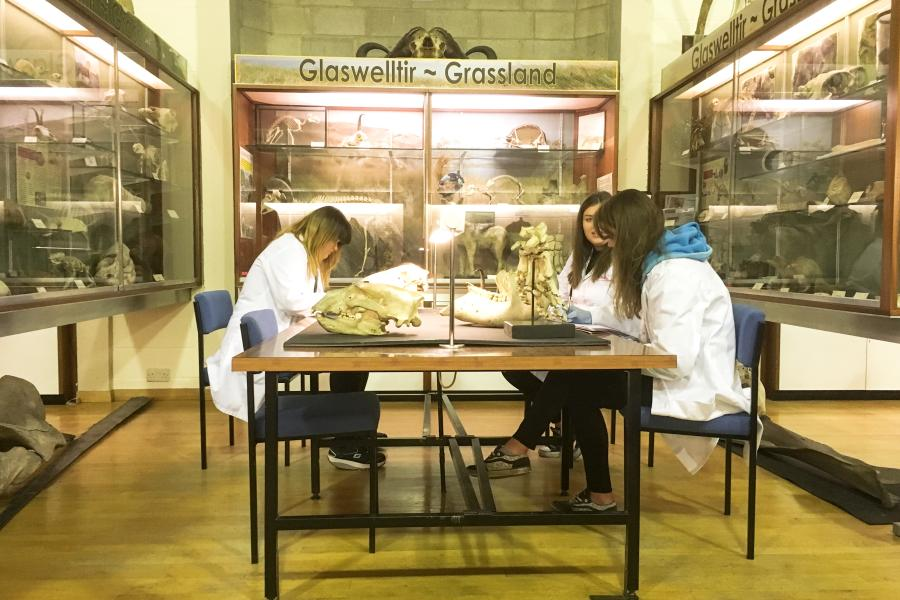 A small group of students working together on project in Bangor's natural history museum
