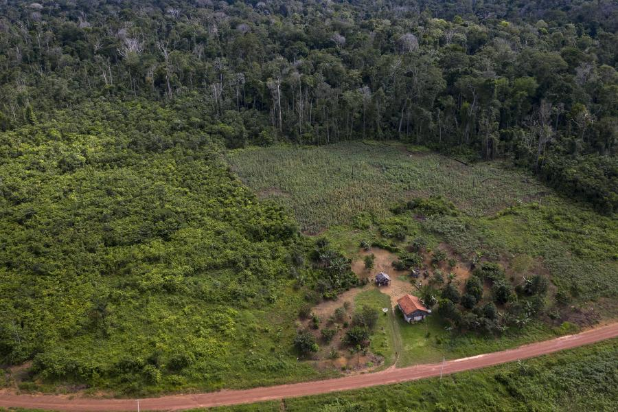 Amazonian forest recovery are dwarfed by deforestation