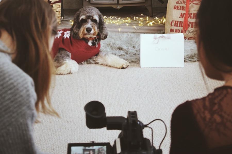 Students filming a dog lying on a white rug