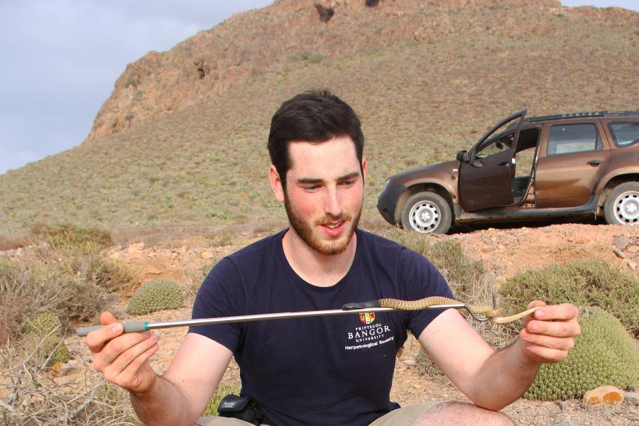 Young man has small snake on a stick in scrub land, with hill and 4x4 vehicle in background