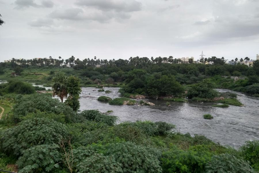 A wide river with small islets and  banked by  trees and shrubs