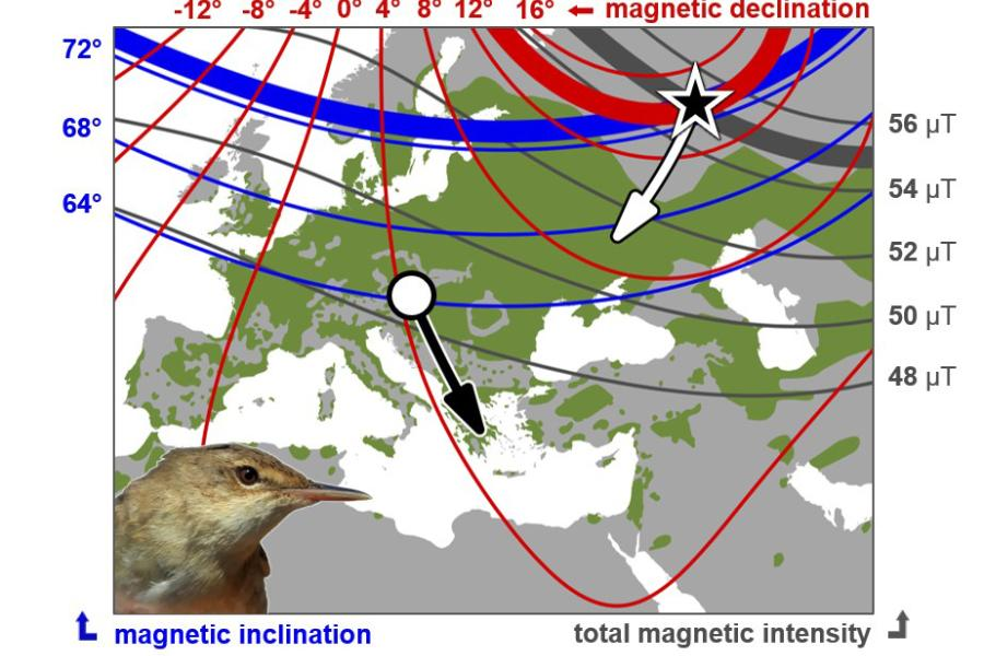Map showing Reed warbler migration and  magnetic declination