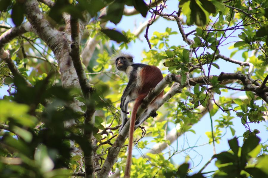 A monkey sits in a tree.