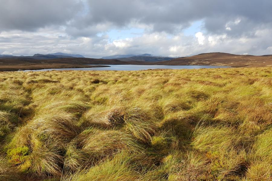 Yellowing grassy humocks in front of a lake and hills suggest upland peatlands.