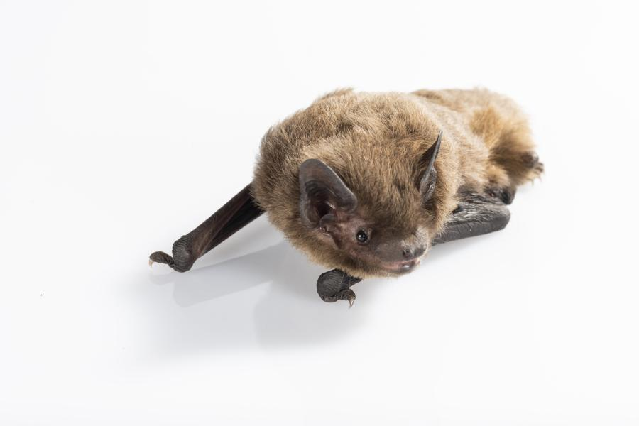A bat againts white background
